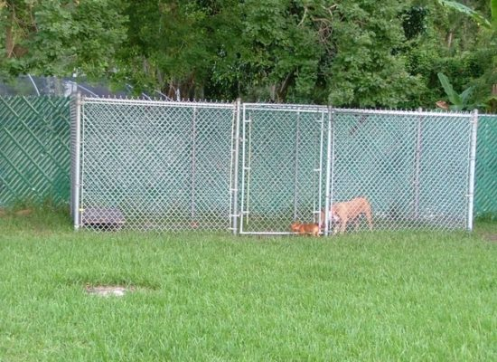 Tampa Chain Link Dog Kennels